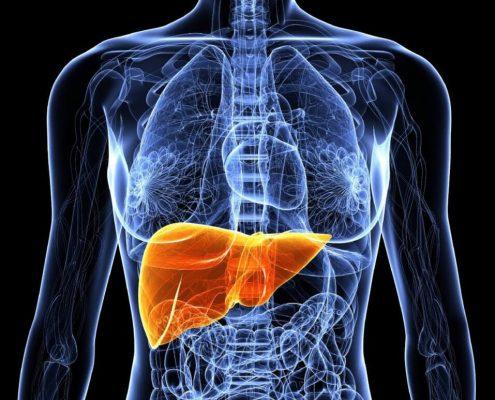 Corpo humano: Fígado